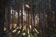 Tegernsee-27-11-11-4.jpg